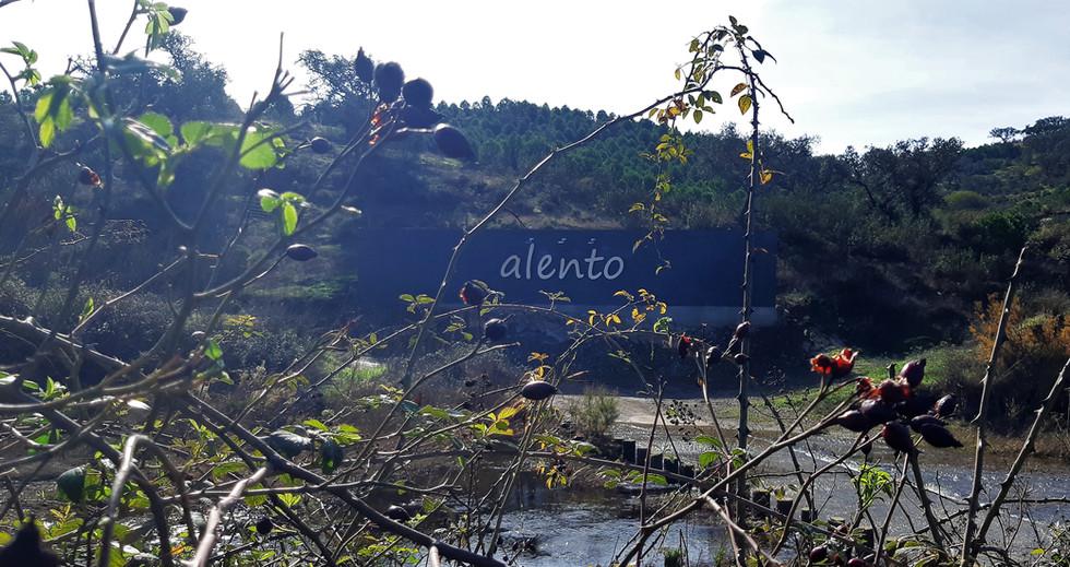 004_Entrada_alento.jpg