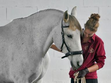 0054_Equus_Horse_Riding.jpg