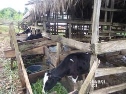 Partner farmer 1