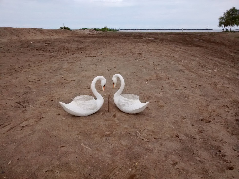 Swans of A Moment Forever