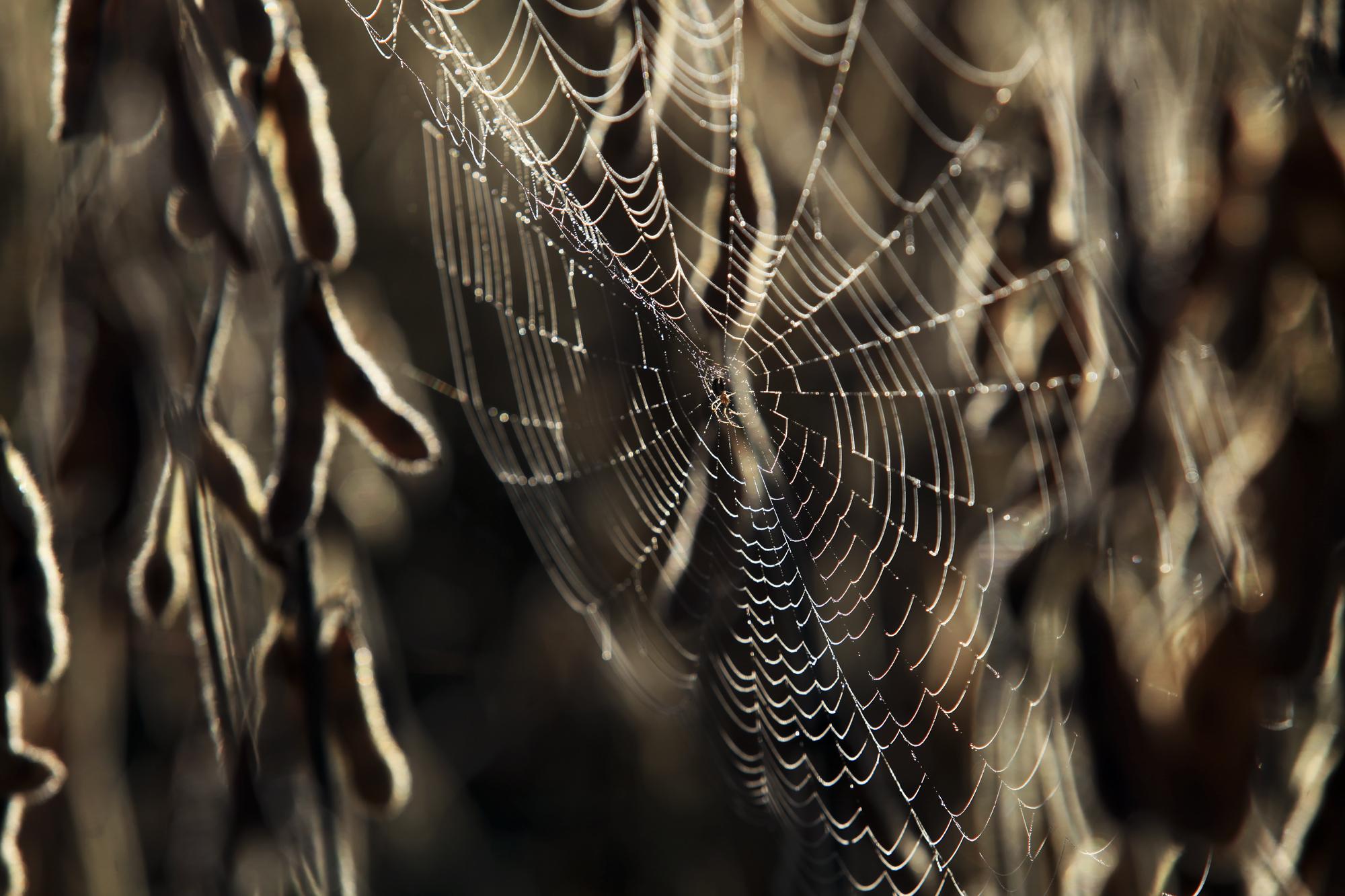 Araña.jpg