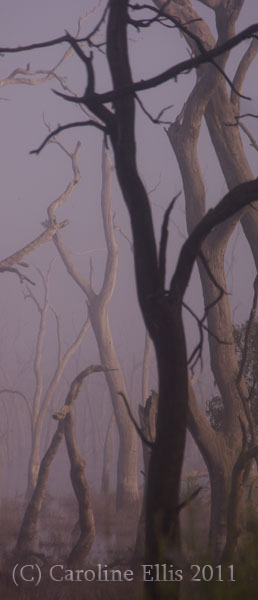 mist-marshes-beautiful-tree-2.
