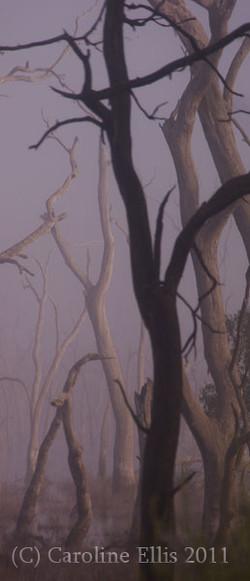 mist-marshes-beautiful-tree-2.