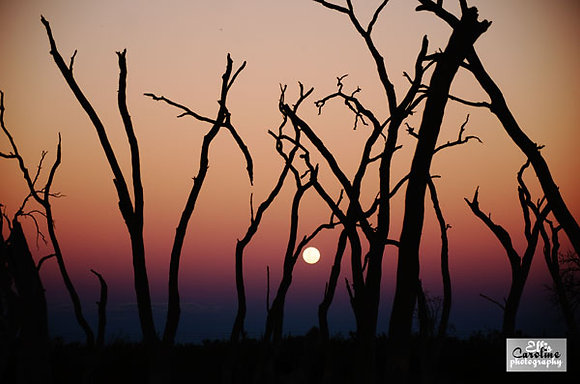 Moon Rise Marshes