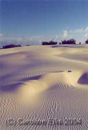 Sand dunes 2 : Fraser Island National Park