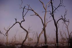 mist-marshes-contrast-tree