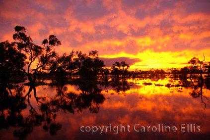 Mystic Park Sunset in Flood: Australia