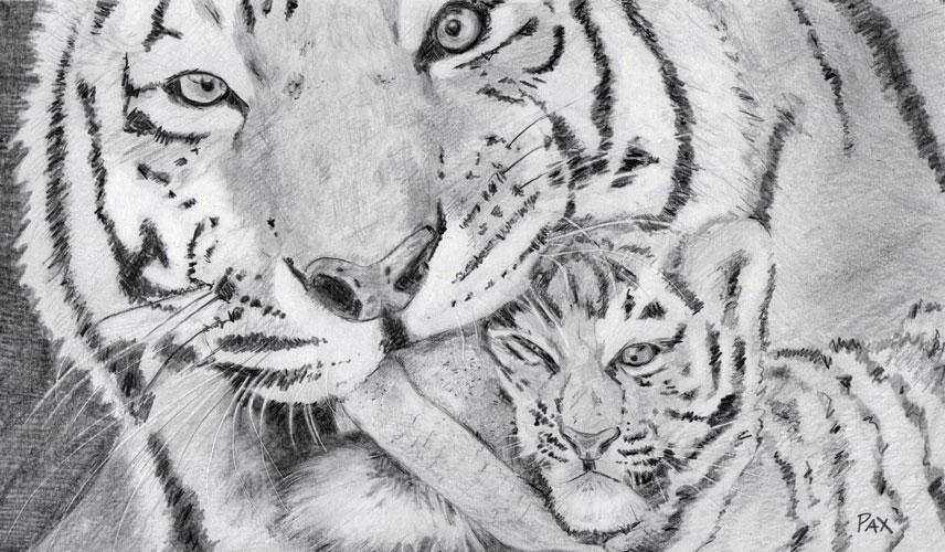 tigers-005-websize.jpg