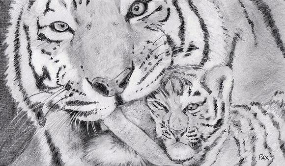 Graphite Tigers