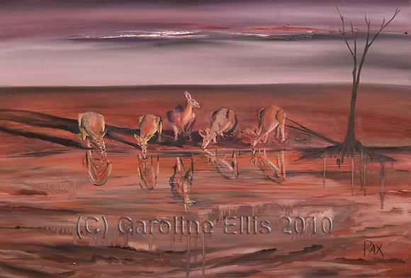 Kangaroos at Waterhole