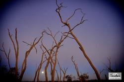 Marshes moon light IMGP4969