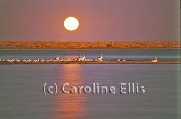 Lake Tutchywop: Australia