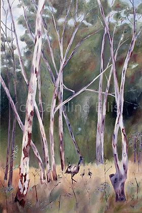 Emus in the Bush