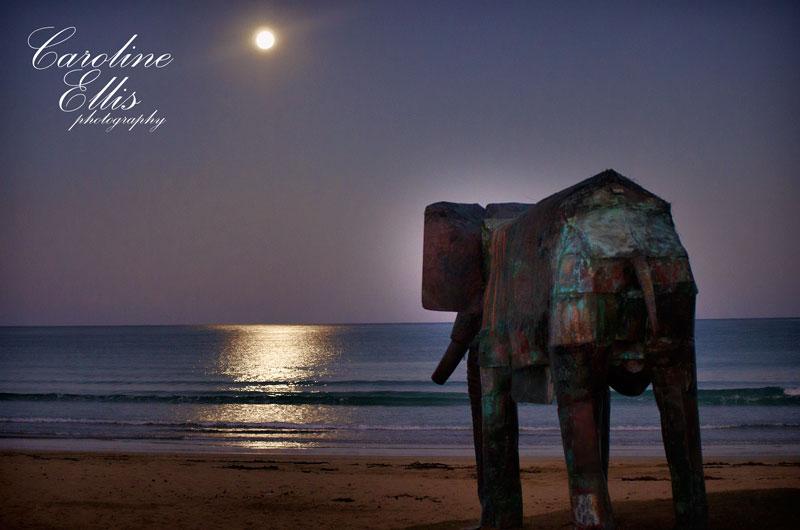 moon-rise-elephant