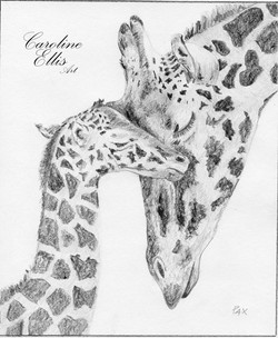 Giraffes graphite