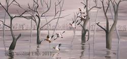 Mallard on the marshes