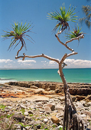 Australian Coast.  Noosa National Park.
