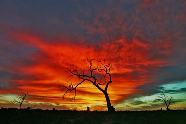 Mystic Park Sunset 1: Australia