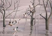 mallard-marshes A70.jpg