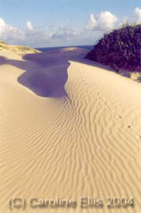 Sand dunes: Fraser Island National Park Australia