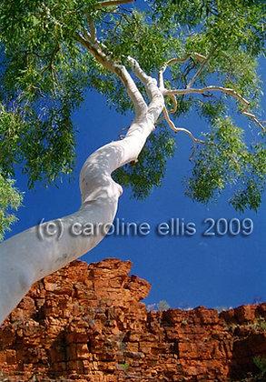 Australian Outback.  Trephina Gorge