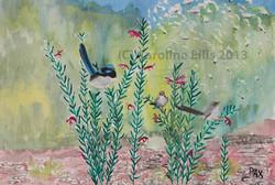 In my garden - wrens