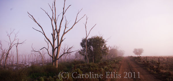 mist-marshes-with-track-2