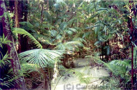 Wangoolba Creek: Fraser Island National Park Aust