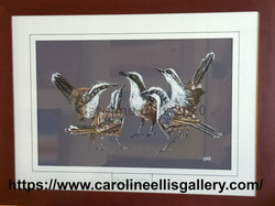 Grey crowned babblers framed