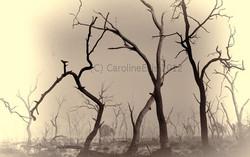 mist-marshes-black & white