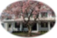 HOUSE background_5655oval.JPG