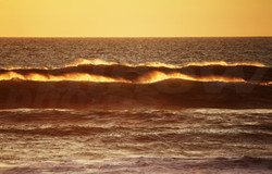 alnewphotos golden waves
