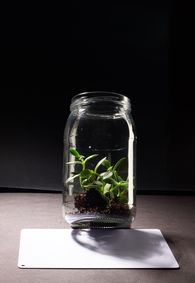 Green Living - Item 1