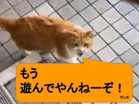 【至福の動画】地域猫とのふれあい