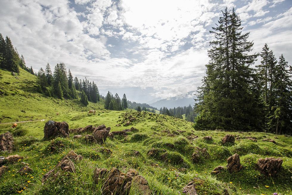 Landschaft Leogang