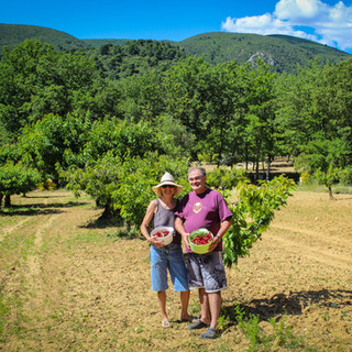 The owners picking cherries at La Jassine, your Provence escape at the foot of the Luberon