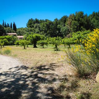 The villa's private lane runs along the cherry orchard