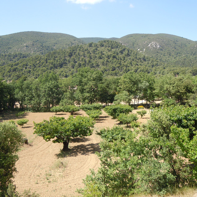 The multiple colours of green of the Luberon in summer from La Jassine, your Provence escape