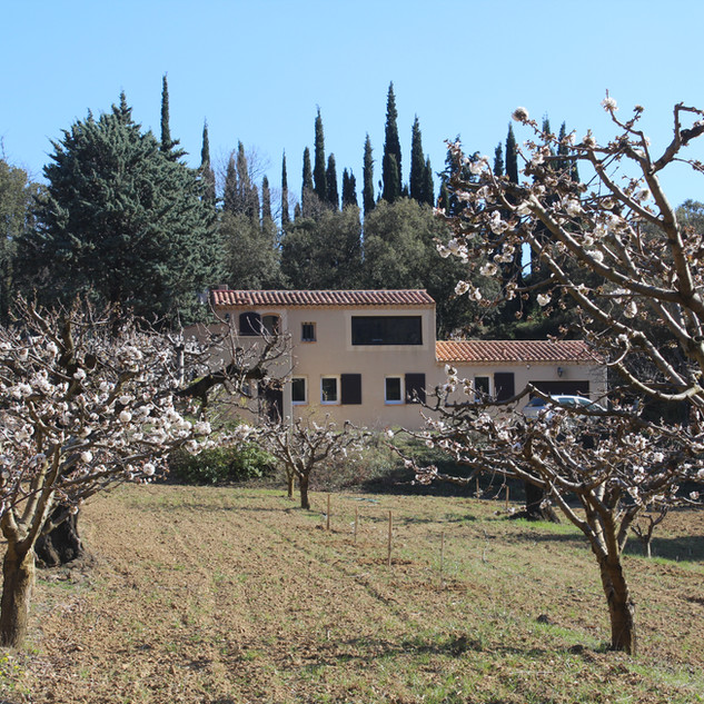 The cherry trees in blossom at your Provence escape, La Jassine in the Luberon