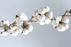 cottonbranch.png
