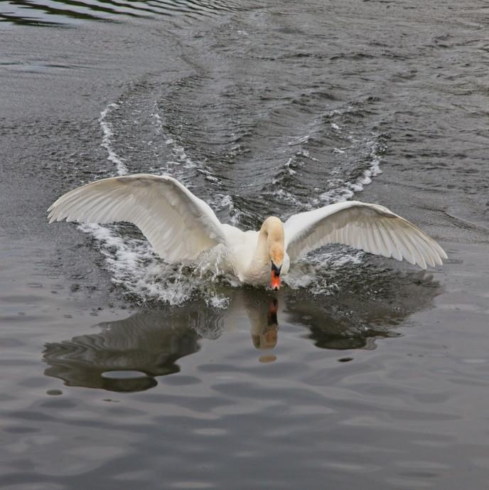Bumpy Landing