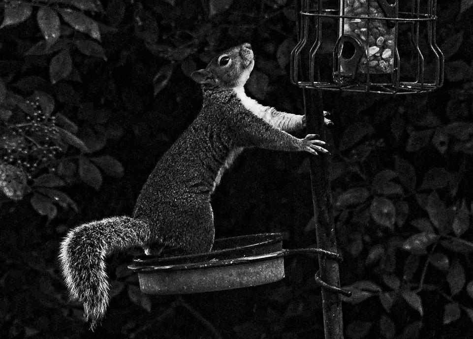 Boris raiding the peanuts