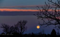 Aurora Moon 032821