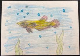 #2 by Anika Creelman (Youth)