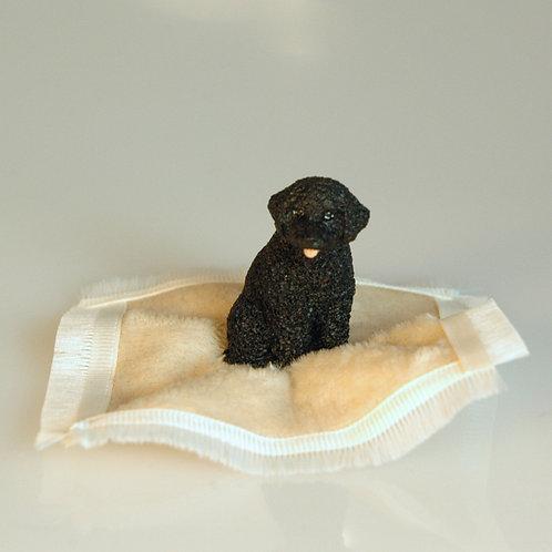 Poodle on a Blanket