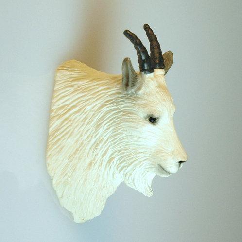 Goat Trophy Head