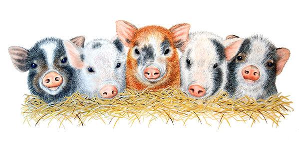 Five Little Pigs.jpg