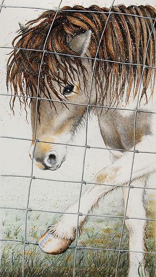 Latest Pony Fence.jpg