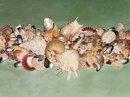 shellswag.jpg