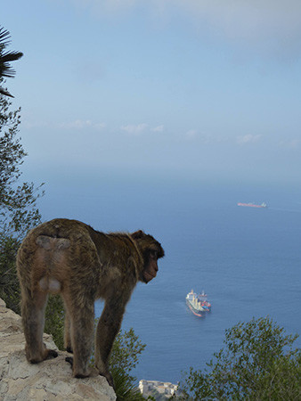 Gibraltar-5-450.jpg